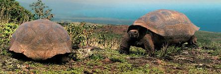 Travel_Galapagos_Wide_Tile