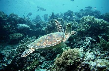 Sea_turtle_2