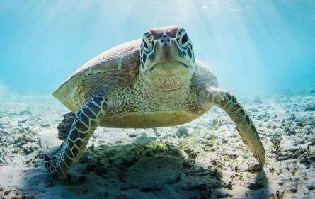Sea-turtle-blog-pic-(istock-purchase)