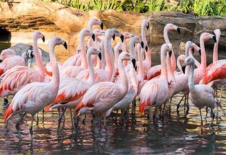 from Darian flamingo dating