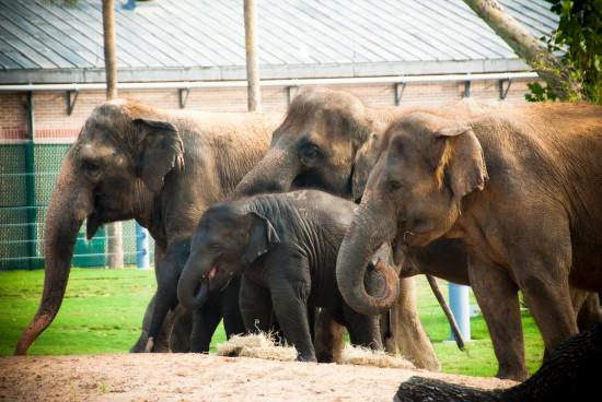 elephant fam