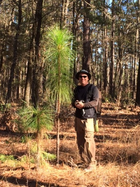 Zoo staff member, John, next to a growing long-leaf pine tree.