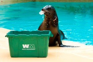 Sea Lion Recycling