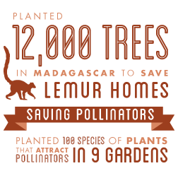 Our conservation partners in Madagascar do similar planting activities to save lemurs!