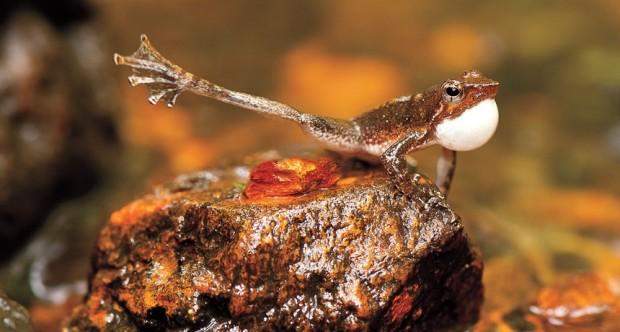 frog blog1