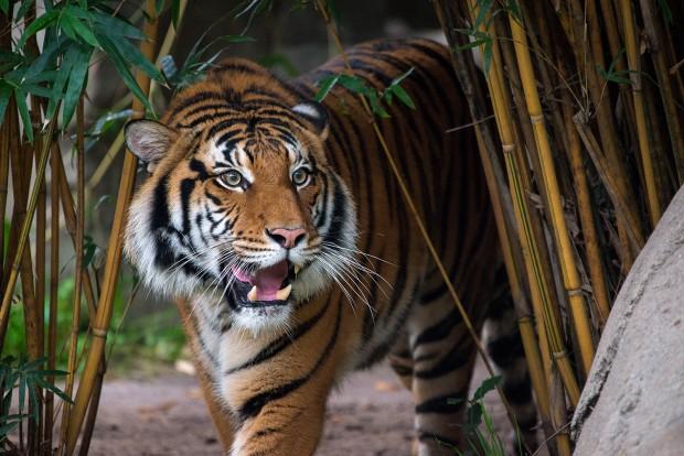 © Stephanie Adams, Houston Zoo
