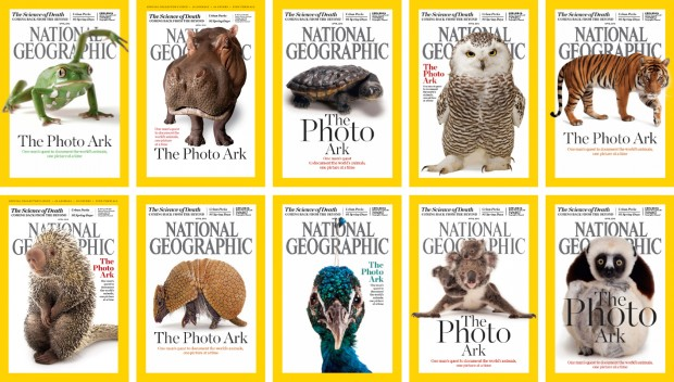 ©National Geographic  Top row, from left: waxy monkey tree frog, hippopotamus, Reimann's snake-necked turtle, snowy owl, Malayan tiger. Bottom row, from left: Brazilian porcupine, southern three-banded armadillo, Indian peafowl, mother and baby koalas, Coquerel's sifaka.