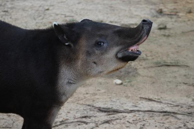 tapir sos blog