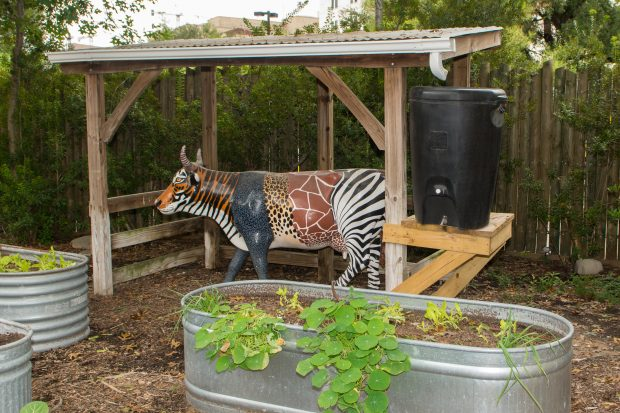 Children's Zoo rain barrel in the produce garden. Water collected here is reused on nearby plants.