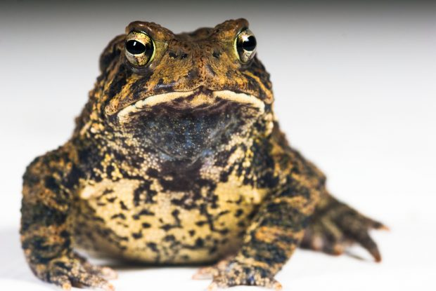 Local wildlife like the critically endangered Houston toad can benefit when we reuse water.