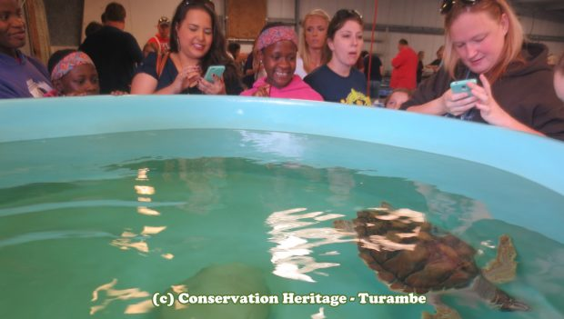 Visiting the sea turtles at NOAA, Galveston