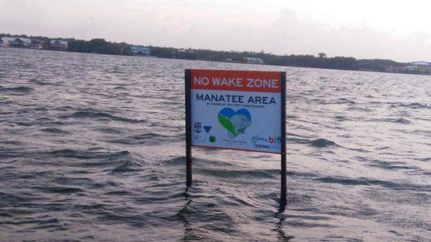 Signs in the waters of Belize telling boaters to slow down to protect this species.