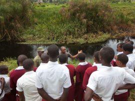 grey-crowned-crane-school-group