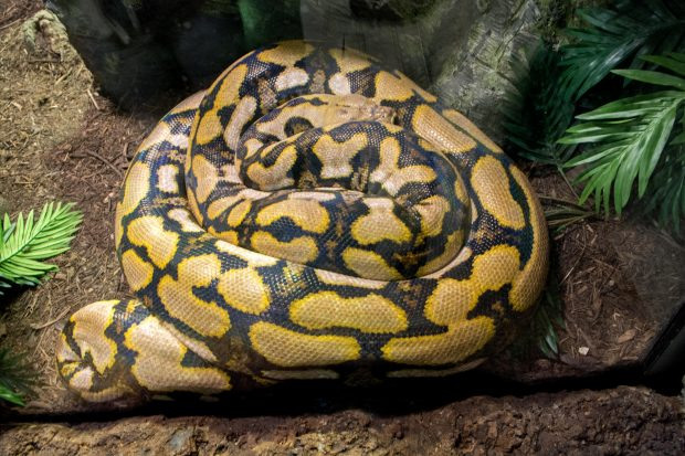 python-constricted