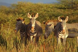 Photo courtesy of Grevy's Zebra Trust
