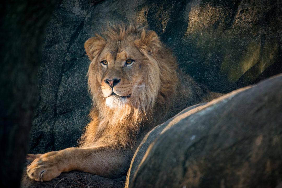 Careers - The Houston Zoo