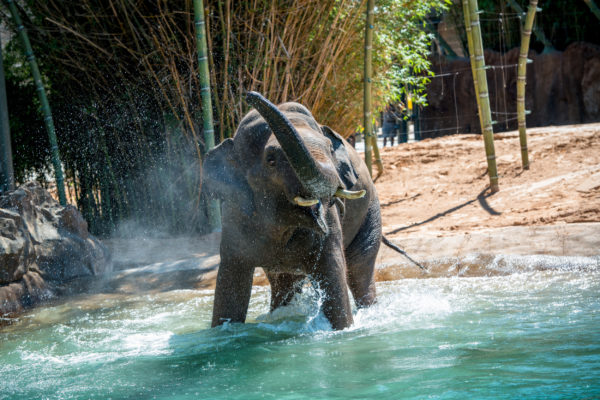 Houston Zoo - See them  Save them