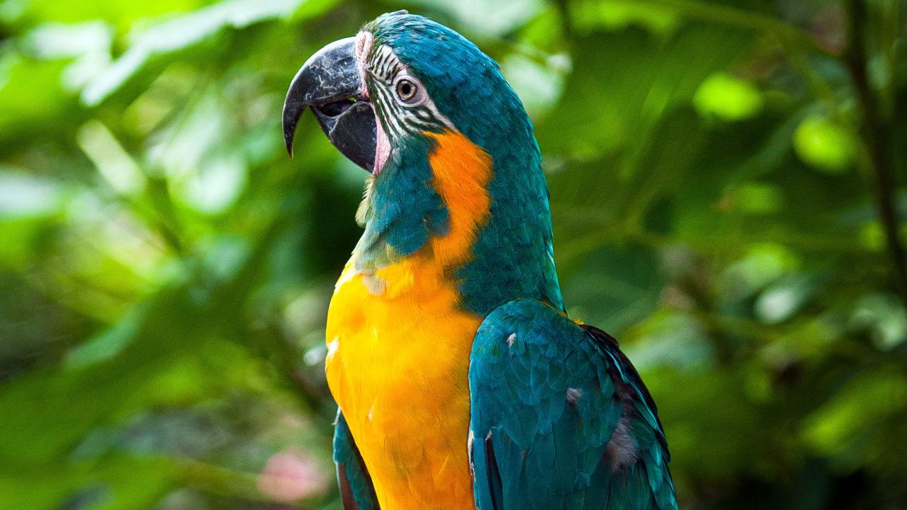up-close shot of blue-throated macaw