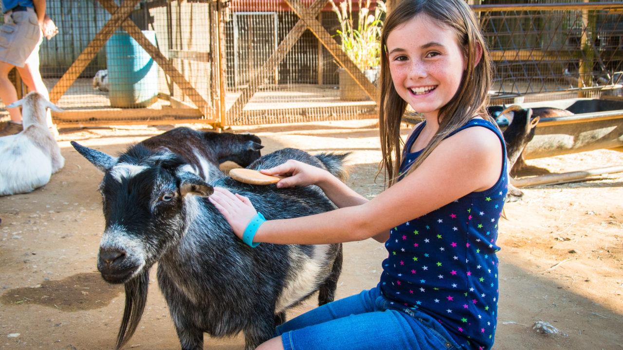 young girl smiling while petting zoo goat in Children's Zoo