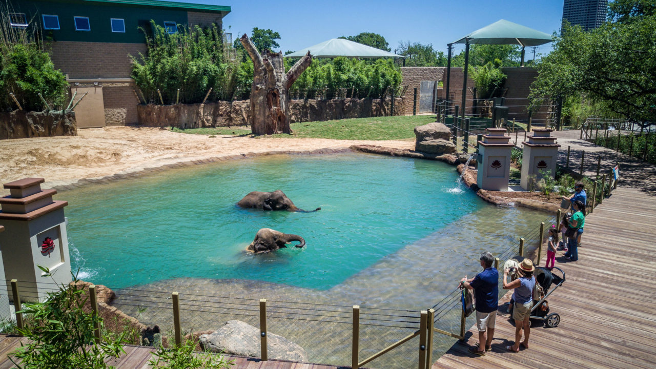 elephant boardwalk with elephants in pool as guests watch