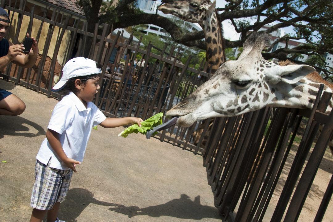 Webcams, The Houston Zoo