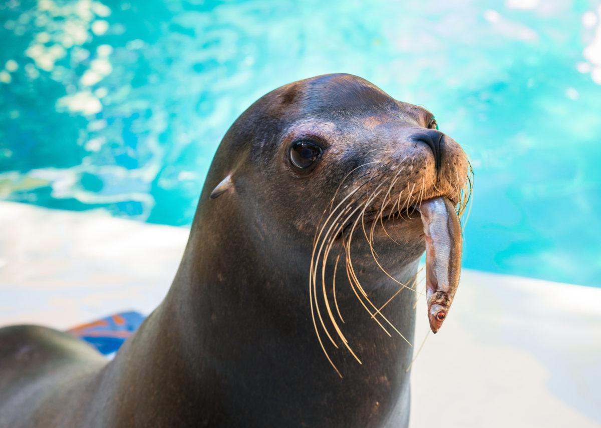 Choosing Ocean-Friendly Seafood Saves Marine Animals - The ...