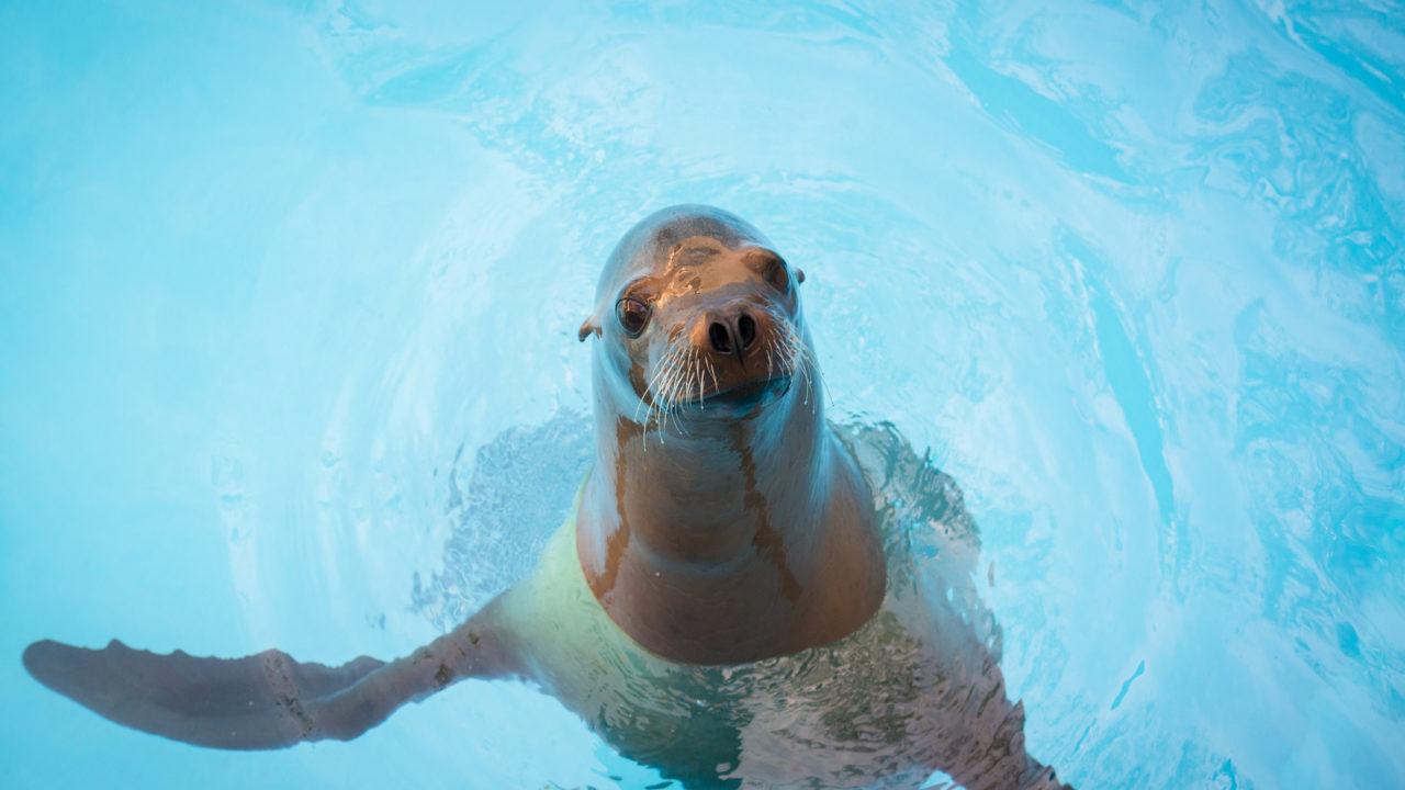 sea lion posing in water habitat