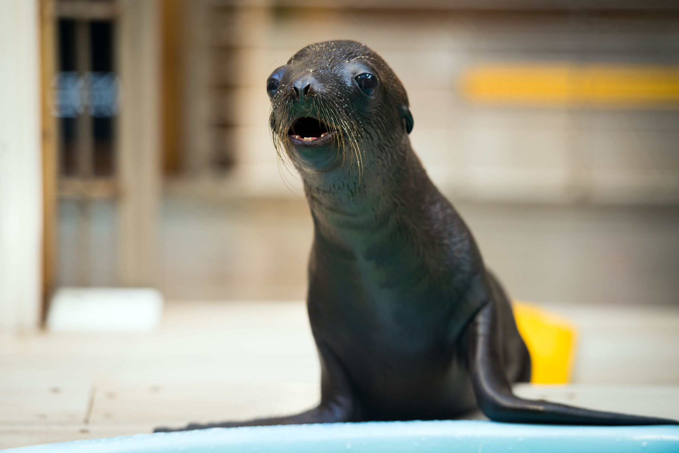 Sea-Lion-Baby-Max-0001-8088 Volunteer Application Form Pdf on medical release form pdf, reference check form pdf, general information form pdf, general release form pdf, wish list form pdf,