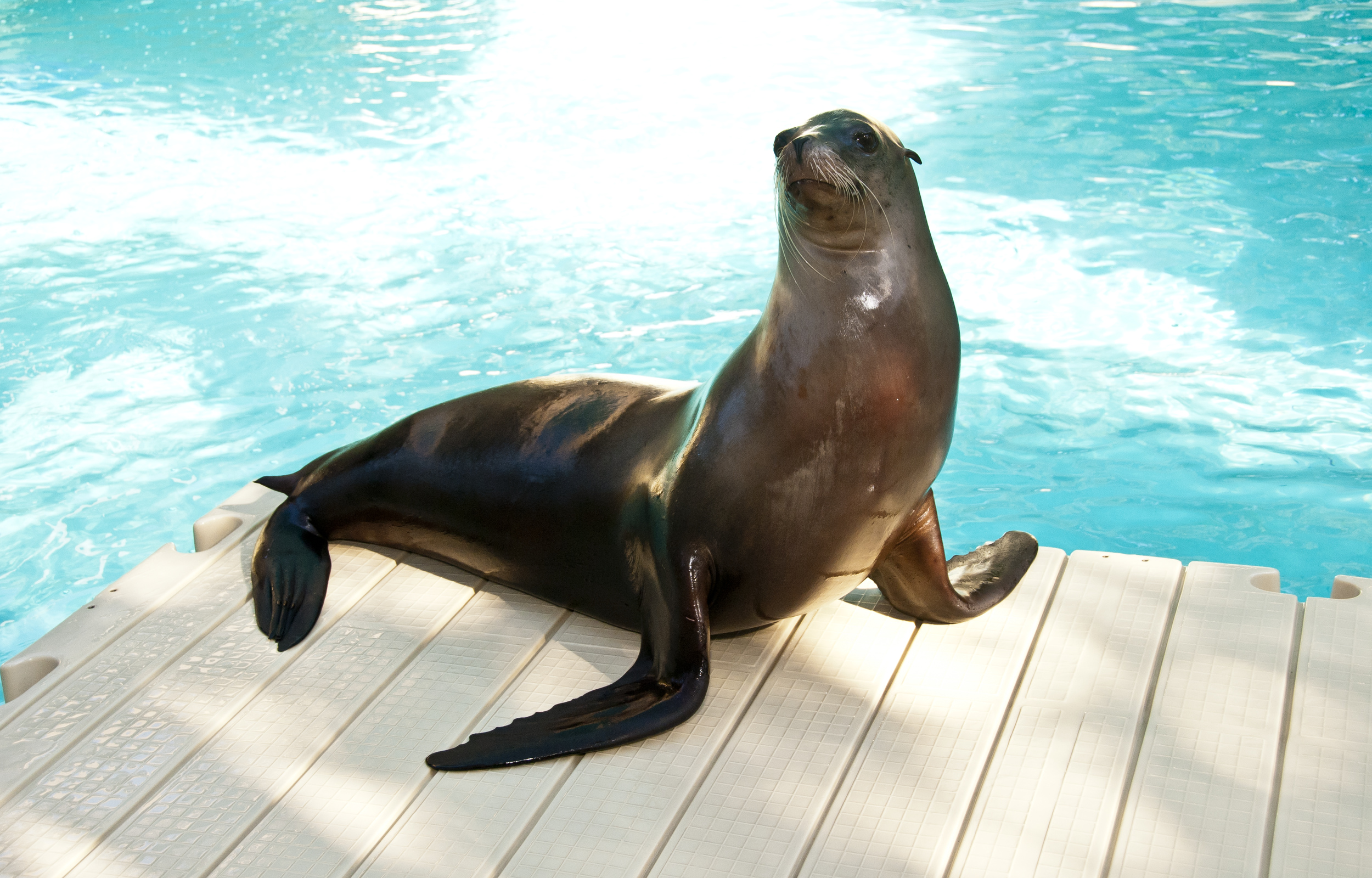 Evening Chill Aquarium Amp Sea Lions The Houston Zoo