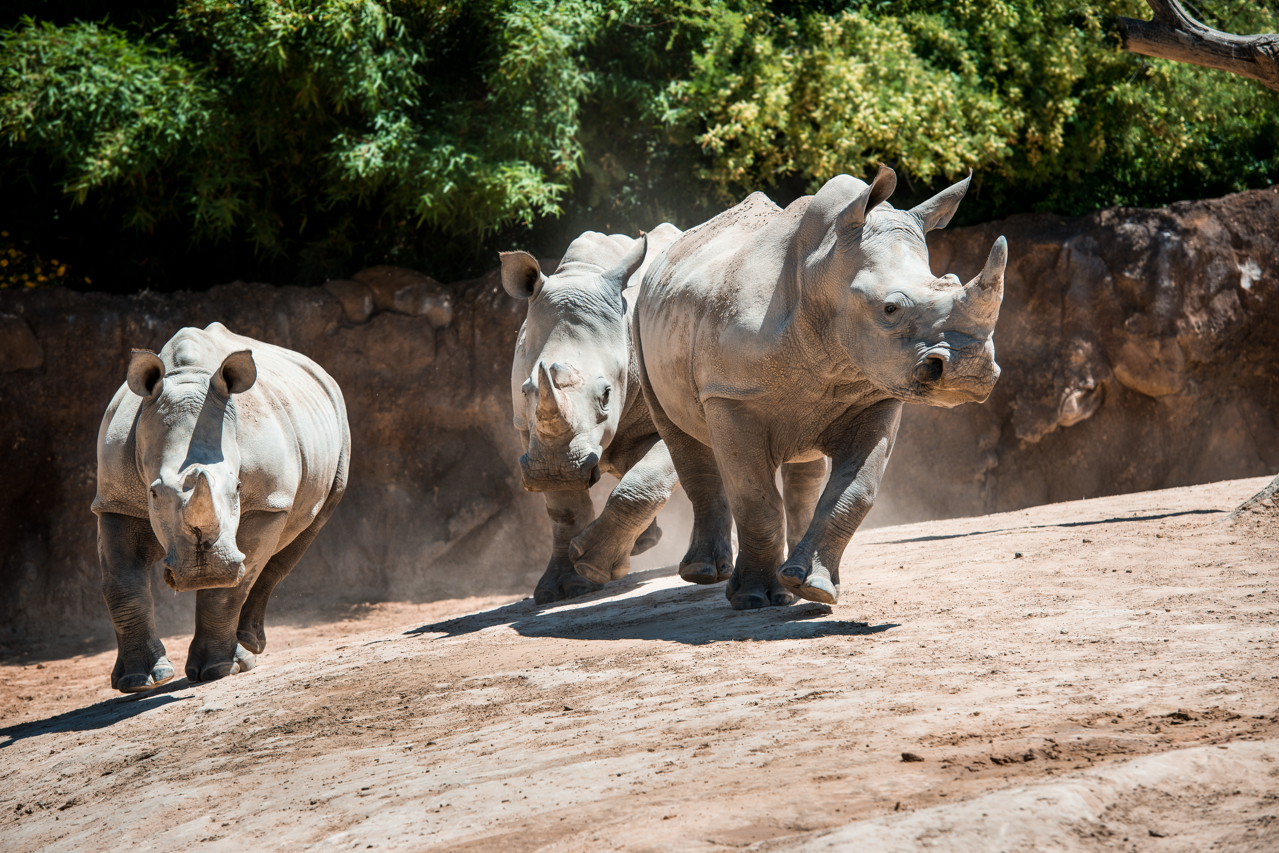 Zoo Sprouts Rumbling Rhinos 4 5 Years The Houston Zoo