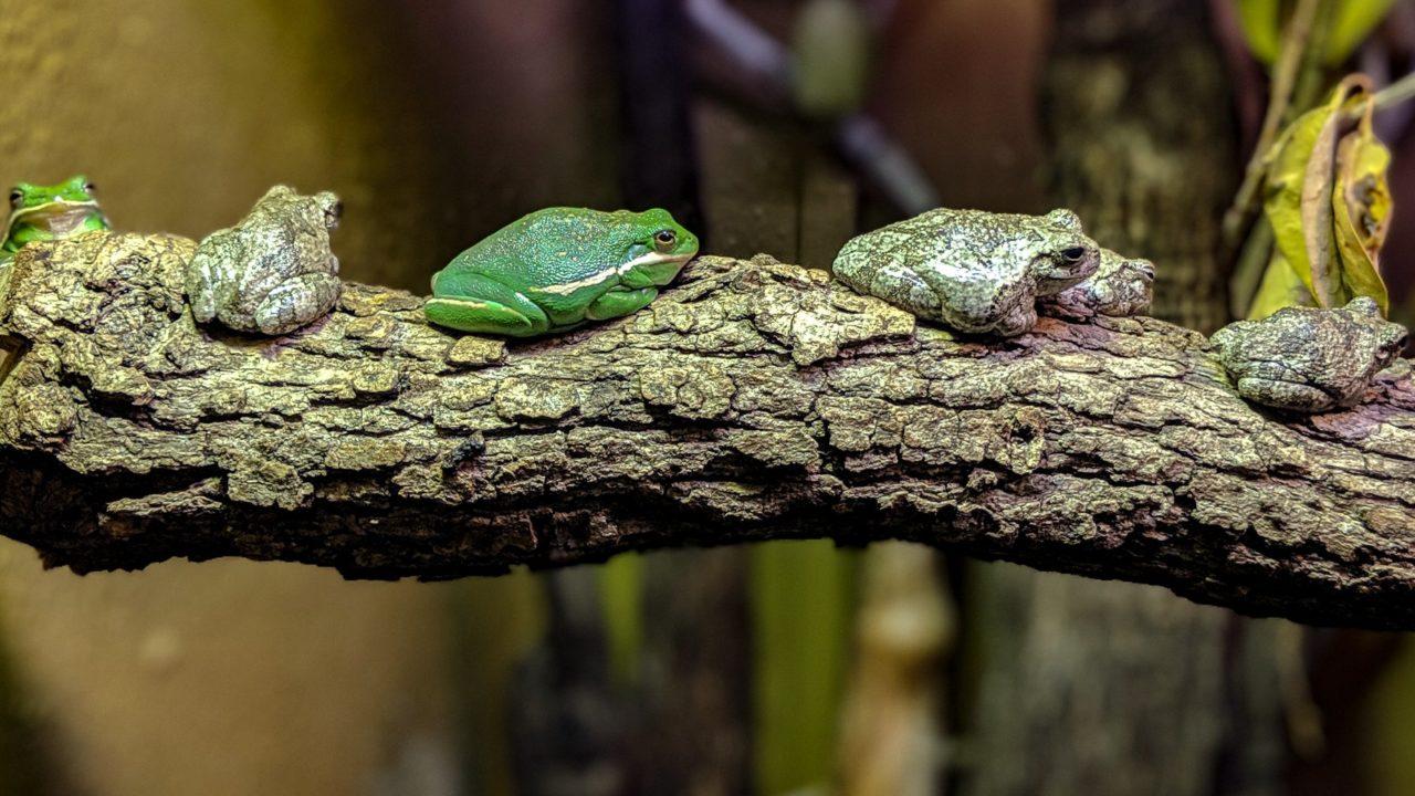 7842fd60c572e Houston Zoo - See them. Save them.