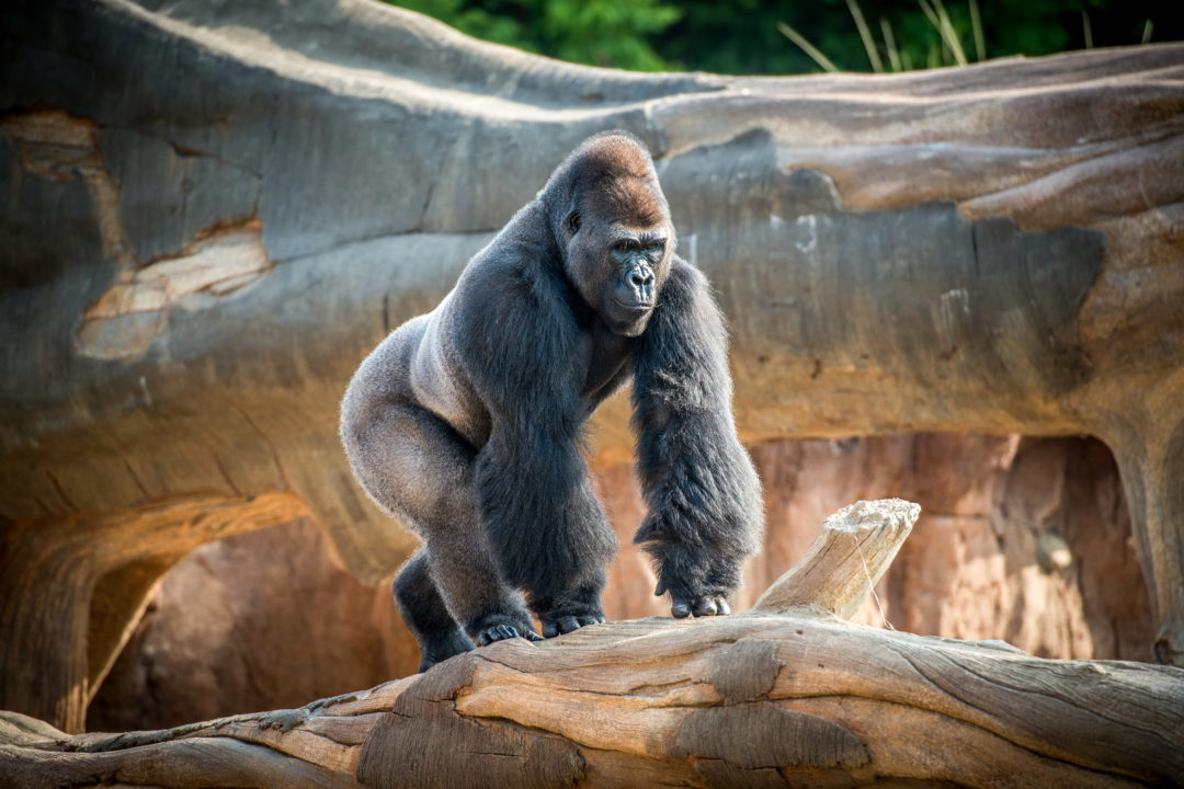 Webcams - The Houston Zoo