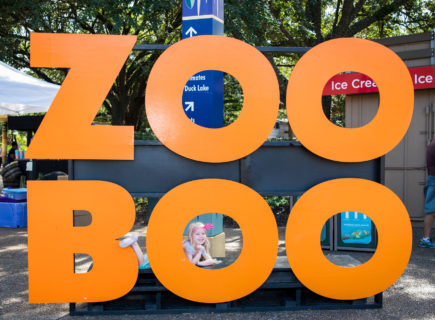 Does The Houston Zoo Decorate For Halloween 2020 Zoo Boo   The Houston Zoo
