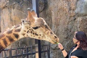 ellen feeding giraffe