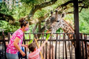 mom and young child feeding giraffe at giraffe feeding platform