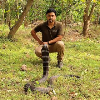 conservation partner and king cobra